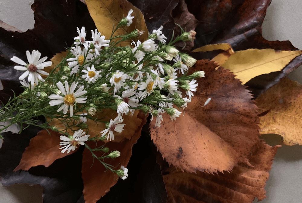Applesauce and Autumn