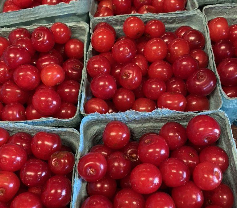 Cherry Land